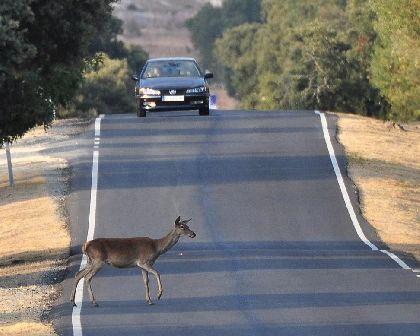 El 20% de los accidentes de tráfico producidos por animales sueltos, se dan en Galicia.